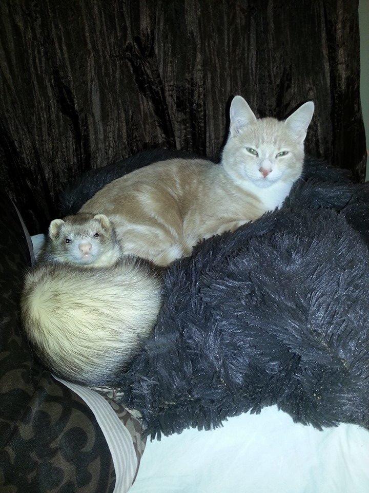 kitten15