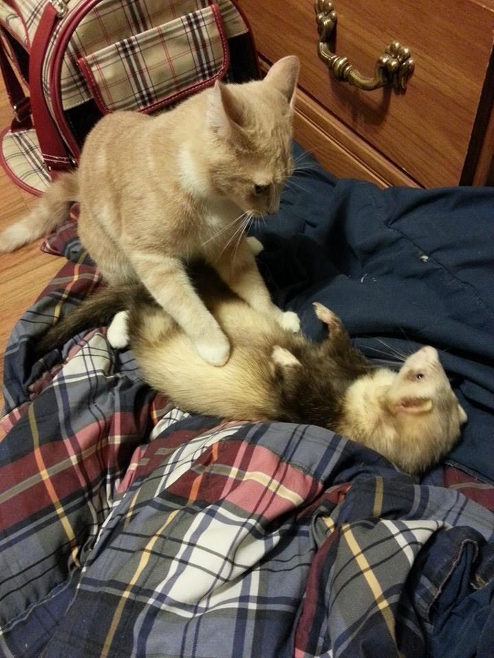 kitten16