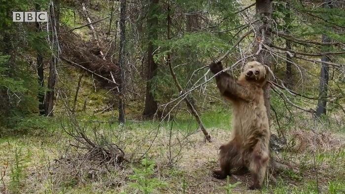Kamerát szereltek az erdőbe. Mit rögzített? Nem bírod ki nevetés nélkül!