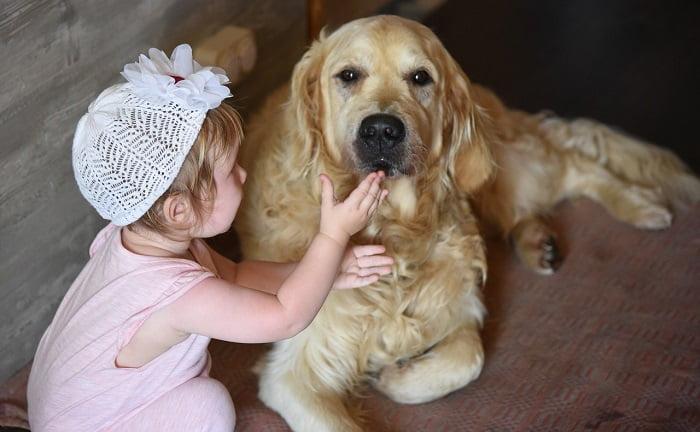 Ezért imádjuk a Golden Retriever kutyákat - Ez a videó mosolyt fog csalni az arcodra!