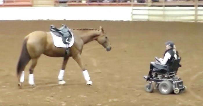 A kerekesszékben ülő nőhöz közeledik a ló. A te csodálatodat is kivívja ez a nő