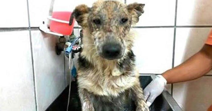 Ezt a kutyust halálra ítélte a gazdája. De figyeld csak a szemeit, amikor élete első meleg fürdőjét kapja!