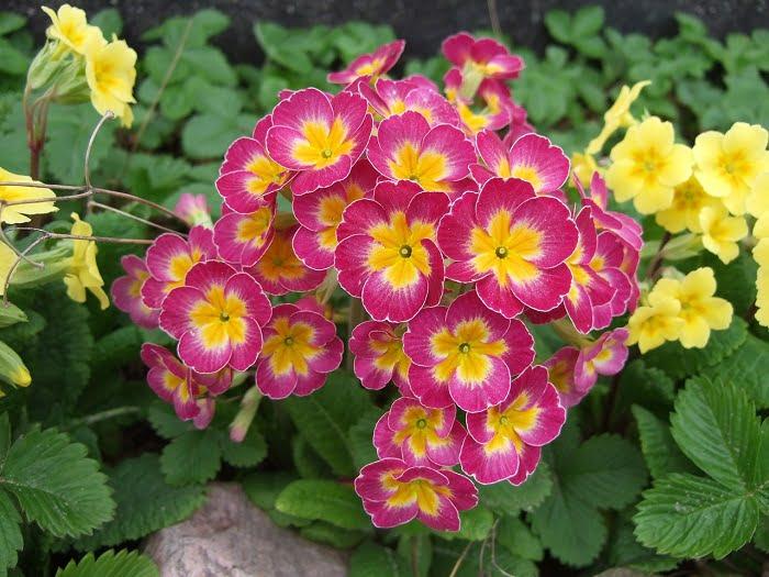 Ezeket a virágokat jó, ha már januárba elültetjük!