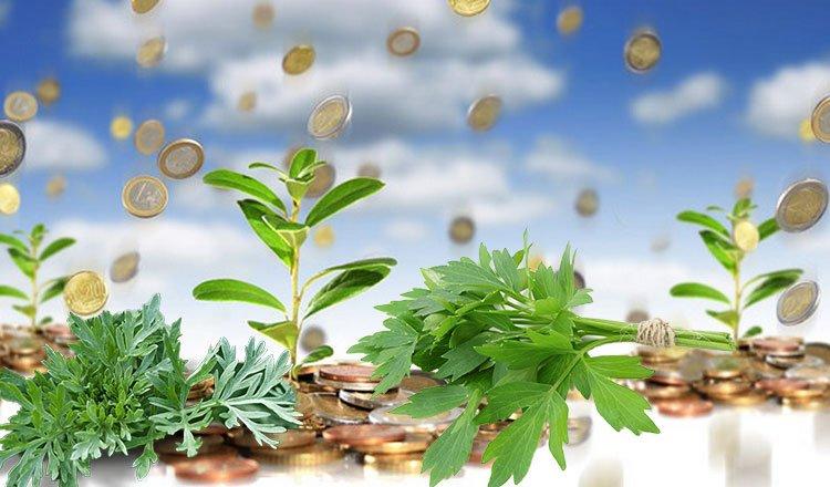 3 növény, ami elűzi a negatív energiát a lakásból és bevonzza a bőséget