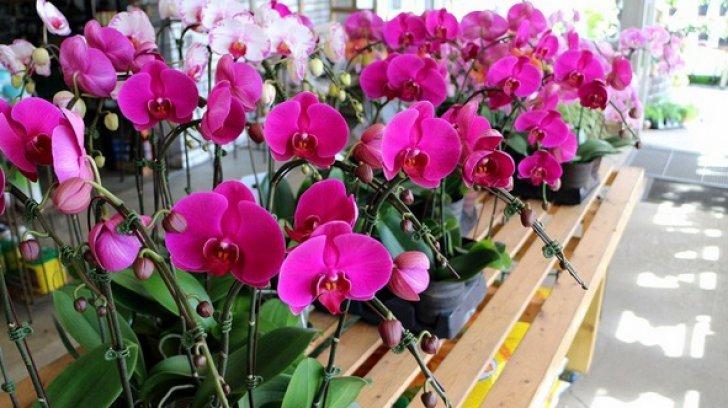 Így szaporítsd sikeresen az orchideákat. Ezzel a módszerrel egész évben virágozni fognak