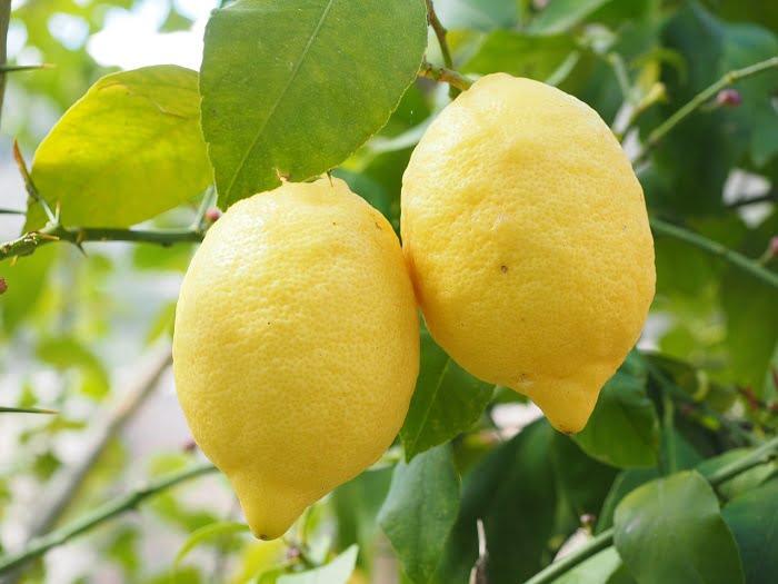 A citrom felhasználásának 9 módja, amiről csak kevesen tudnak!