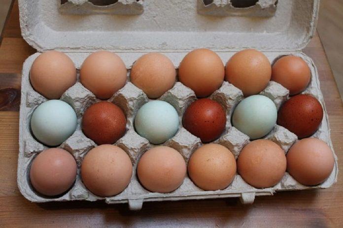 A tojástartó remek segítségünkre van a kertbe is, nem is gondolnád mi mindenre használható