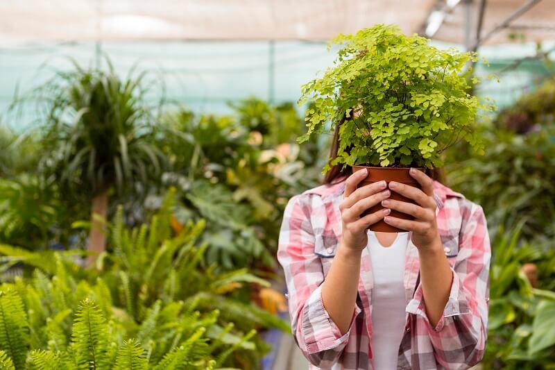 5 szobanövény, ami megtisztítja a levegőt a szobában