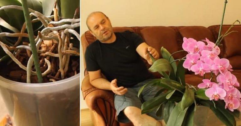 Szeszélyes, de csodálatos: így érheted el, hogy az orchidea minél többet virágozzon