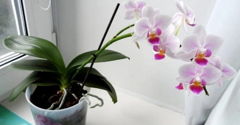 5 súlyos hiba, amit az orchidea gondozásában te is elkövetsz